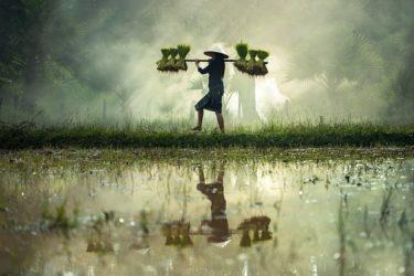 米に湧いた虫の駆除方法と対策(コクゾウムシ・メイガ)